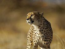 © Namibia Tourism