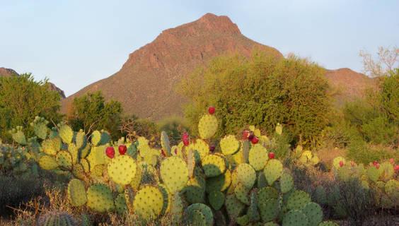 Sonora-Wüste bei Tucson.  © Graf